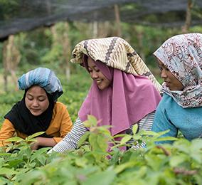 Junge Frauen im Reisfeld