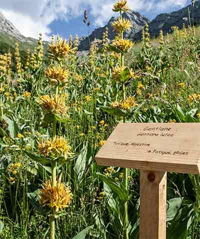 Blumen Domaine Clarins
