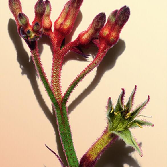 Pflanze