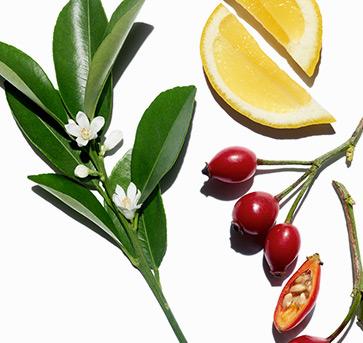 Visuel ingrédients et plantes
