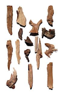 Aktivstoff Sandelholzbaum