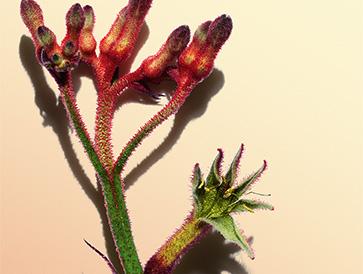 Einmal um die Welt in 80 Pflanzen