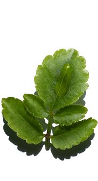 Biologische Goethe-Pflanze
